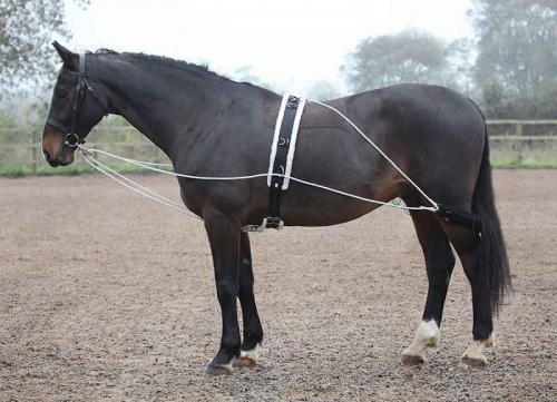 Lunging Aid from Shires Equestrian