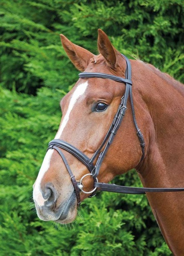 Aviemore Comfort Fit Flash Bridle from Shires