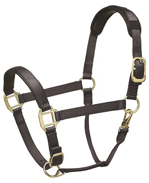 Premium Padded Head Collar from Legacy Equestrian - Grey