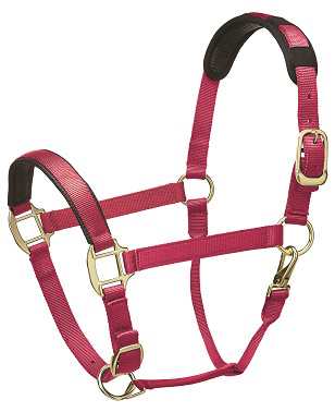 Premium Padded Head Collar from Legacy Equestrian - Hot Pink