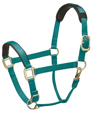 Premium Padded Head Collar from Legacy Equestrian - Mint