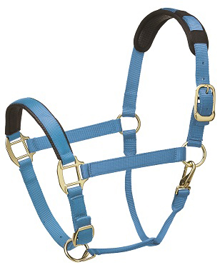Premium Padded Head Collar from Legacy Equestrian - Turquoise