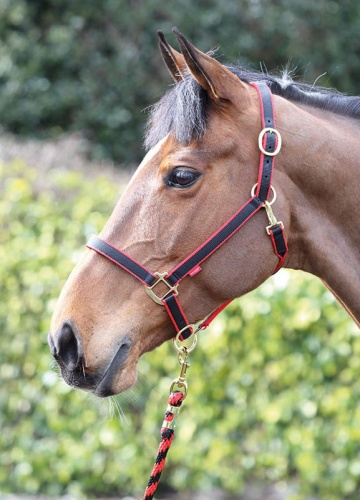 Jester Two Tone Headcollar From Bridleway