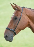 Blenheim Drop Noseband from Shires
