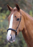 Blenheim Padded Drop Noseband from Shires