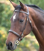 Stitched In-hand Blenheim Bridle from Shires Equestrian