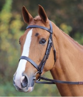 Aviemore Plain Classic Bridle from Shires Equestrian