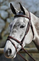 Buckingham Plain Flash Bridle from Bridleway